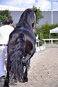 pferde van delden