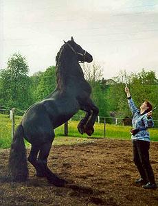 besitzer im pferdepass ändern