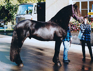 pferd hinterhand rutscht weg